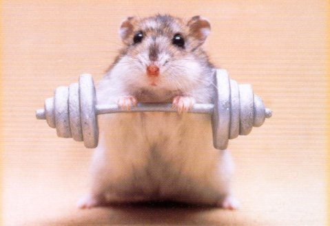 hamster_weights_TF99IU